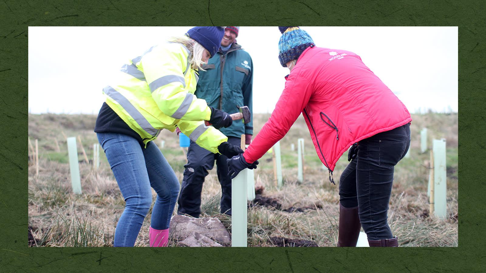 Sally Hopson planting a tree