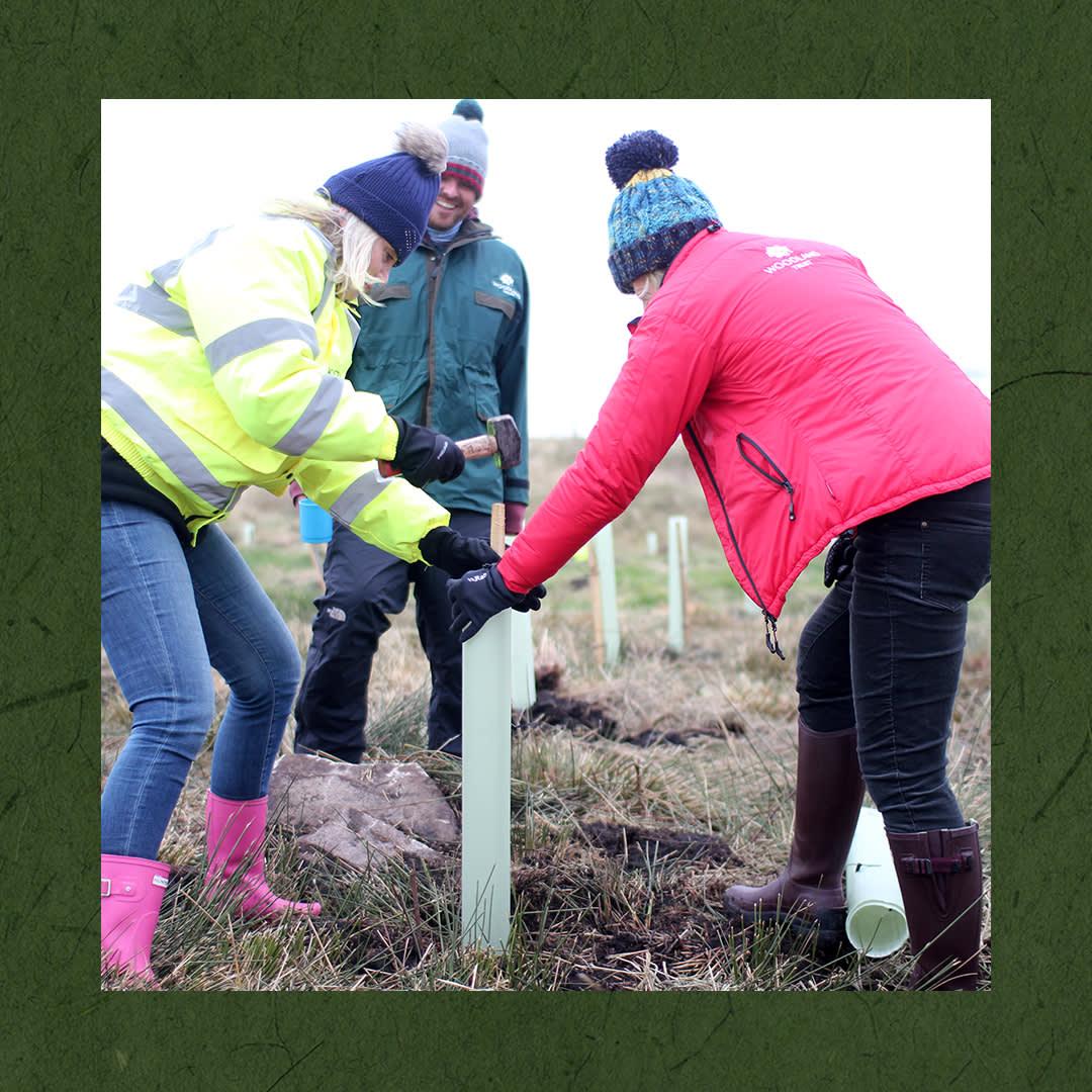 Sofology Tree Planting